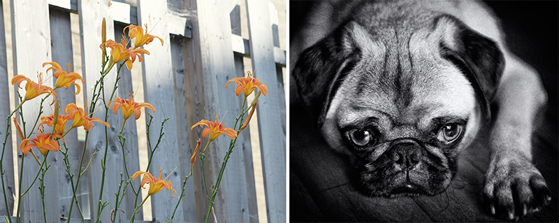 hope, diptych,